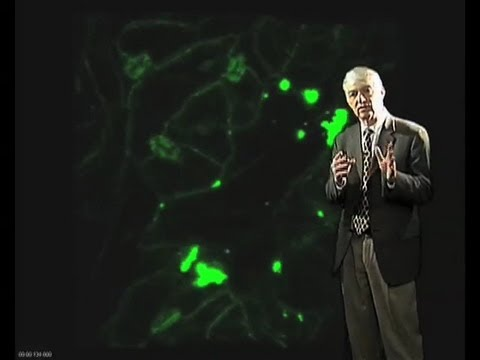 The spread of tobacco mosaic virus - roger beachy (donald danforth plant science center)