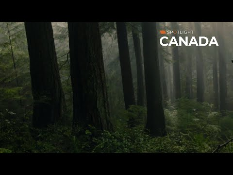 A deadly moral panic in canada \\ spotlight series